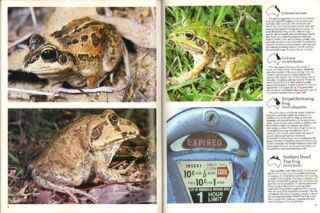 Australian tropical reptiles and frogs.