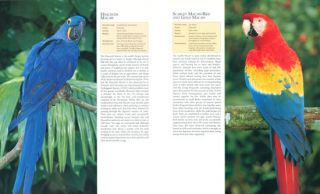 The encyclopedia of birds: featuring over 400 species.