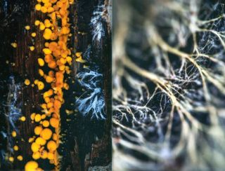 The allure of fungi.