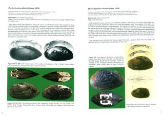 The freshwater bivalves of China.