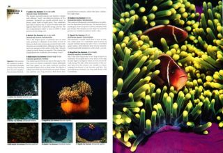 Marine life of Southeast Asia and the Pacific.