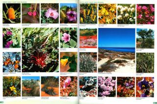Guide to the wildflowers of Western Australia.