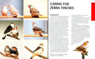 Zebra finches: everything about housing, care, nutrition, breeding, and health care.