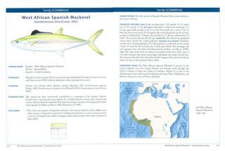 Tunas and billfishes of the world.