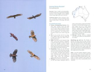 Australian birds of prey in flight: a photographic guide.