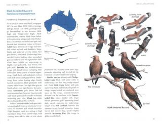 Birds of prey of Australia: a field guide.