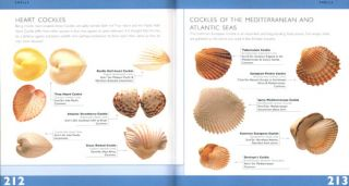 Pocket guide to shells.