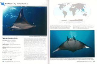 Guide to the Manta and Devil rays of the world.