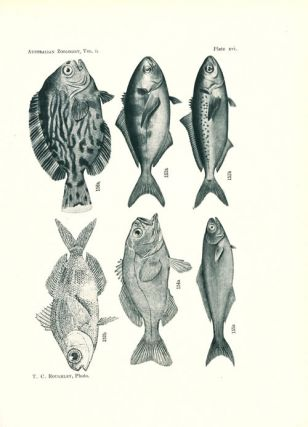 The fishes and fish-like animals of New South Wales