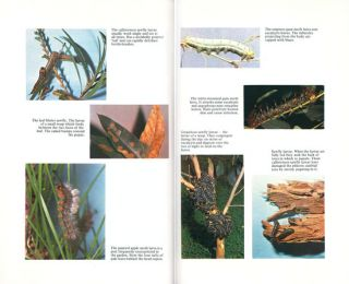 Australian trees: a guide to their care and cure.