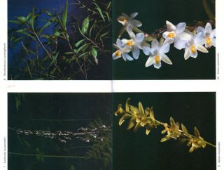 A field guide to New Zealand native orchids.