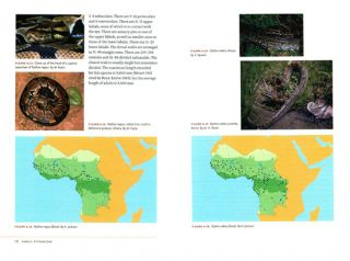 Snakes of Central and Western Africa.