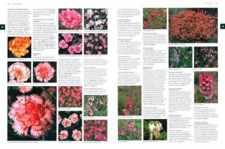 Botanica: the illustrated A-Z of 1000 garden plants for Australian gardens and how to cultivate them.