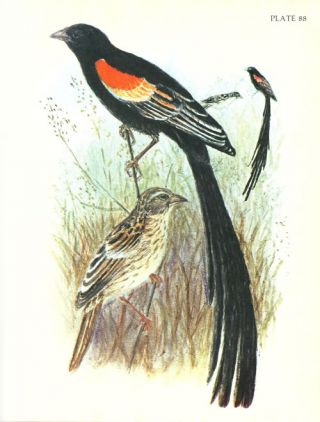 The birds of east Africa, [volume one: Ploceidae]. A collection of lithographs prepared from the originals drawn from nature by V. G. L. van Someran between the years 1909 and 1937. A limited edition.