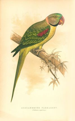 The speaking parrots: a scientific manual.