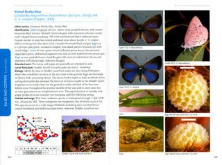 Butterflies: identification and life history.