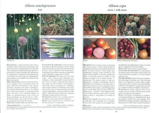 Food plants of the world: identification, culinary uses, and identification value.