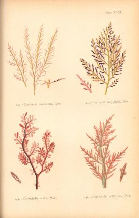 """British sea-weeds. Drawn from Professor Harvey's """"Phycological Britannica"""": with descriptions, an amateur's synopsis, rules for laying out sea-weeds, an order for arranging them in the herbarium, and an appendix of new species."""