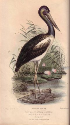 Gatherings of a naturalist in Australasia: being observations principally on the animal and vegetable productions of New South Wales, New Zealand, and some of the Austral islands.