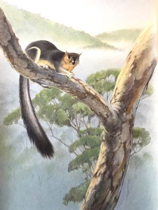 Giant Squirrel. Peter Marsack