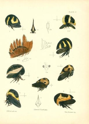 A monograph of the Membracidae.