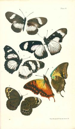 South-African butterflies: a monograph of the extra-tropical species.