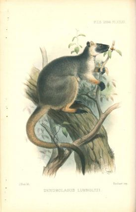 On some apparently new marsupials from Queensland.