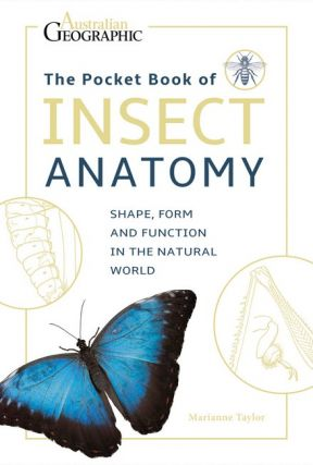Insect anatomy. Mariannne Taylor