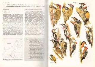 The birds of Pakistan, volume one: regional studies and non-Passeriformes.