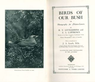 Birds of our bush, or photography for nature-lovers.