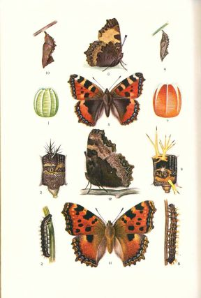The complete book of British butterflies.