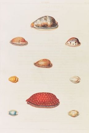 Conchology, or the natural history of shells: containing a new arrangement of the genera and species, illustrated by coloured engravings executed from the natural specimens, and including the latest discoveries.