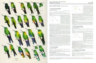 Handbook of the birds of the world [HBW], seventeen volumes.