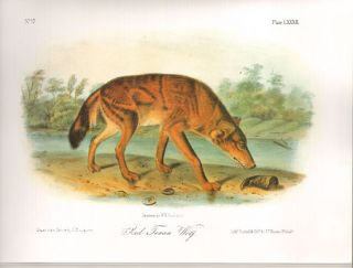 Audubon's Quadrupeds of North America.