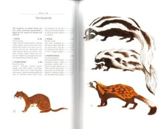 A field guide to the mammals of Egypt.
