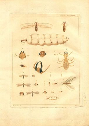 Some account of the termites, which are found in Africa and other hot climates.