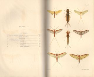 New Zealand Neuroptera: a popular introduction to the life-histories and habits of may-flies, dragon-flies, caddis-flies and allied insects inhabiting New Zealand, including notes on their relation to angling.