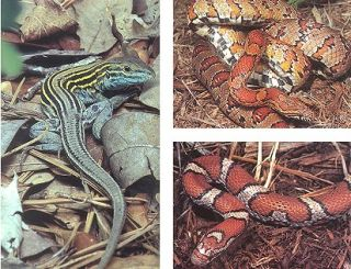 The reptiles of Virginia
