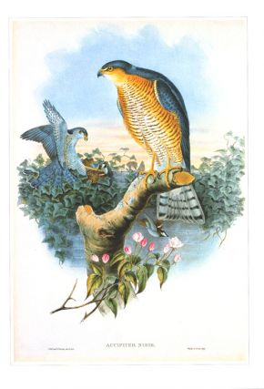 Classic natural history prints: Birds of prey by Joseph Wolf.