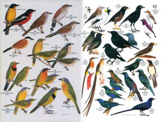 Roberts' Birds of southern Africa.