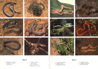 Colour guide to the snakes of Sri Lanka.