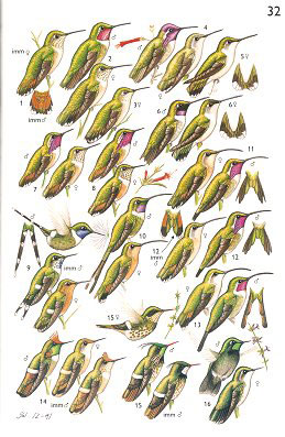 A guide to the birds of Mexico and northern central America.