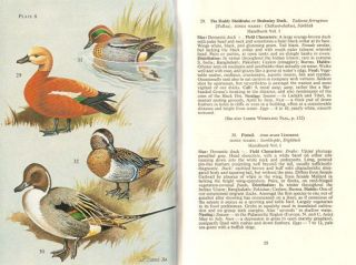 The book of Indian birds.