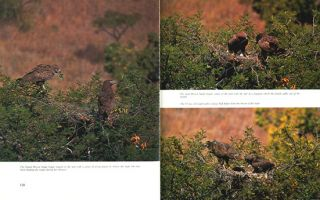 Eagle days: a study of African eagles at the nest.