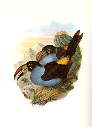 Birds of South America: illustrations from the lithographs of John Gould.