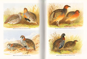 The quails, partridges, and francolins of the world.