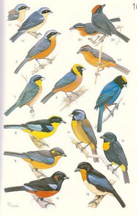 The birds of South America, volume one: The Oscine Passerines: Jays, and swallows, wrens, thrushes, and allies, vireos and wood-warblers, tanagers, icterids and finches.