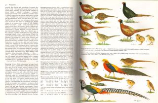 Handbook of the birds of Europe, the Middle East and North Africa. The birds of the Western Palearctic [BWP], volume two: Hawks to bustards.