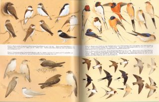 Handbook of the birds of Europe, the Middle East and North Africa. The birds of the Western Palearctic [BWP], volume five: Tyrant flycatchers to thrushes.