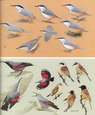 Handbook of the birds of Europe, the Middle East and North Africa. The birds of the Western Palearctic [BWP], volume seven: Flycatchers to shrikes.